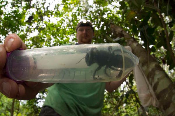 1981 के बाद दुनिया की सबसे बड़ी मक्खी देखी गई