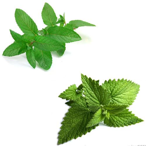 सेहत के लिए 6 हरी पत्तियों के कमाल के लाभ