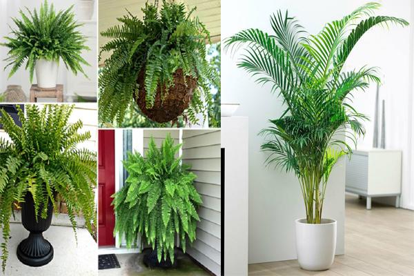 घर की खूबसूरती बढ़ाने के साथ-साथ आपकी हेल्थ का भी ध्यान रखेंगे ये पौधें...