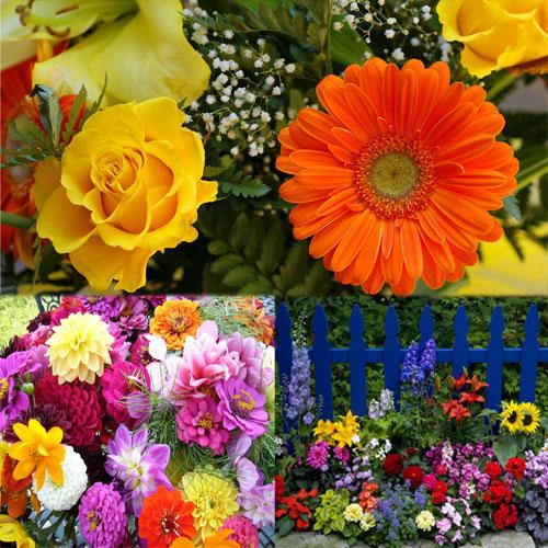 कमाल के लाभ फूलों के घर के लिए...