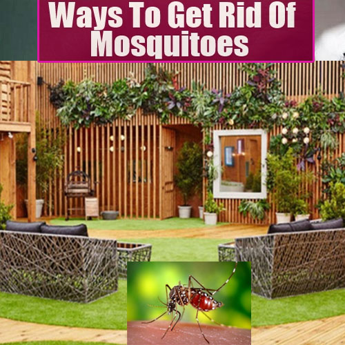 Amazing Way To Get Rid Of Mosquitoes In Home Decor World