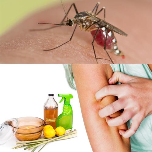आसान तरीका मच्छरों को भगाने का