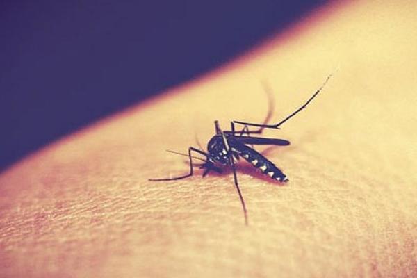 उपचारित मच्छरदानी ही बचाएगी मलेरिया से