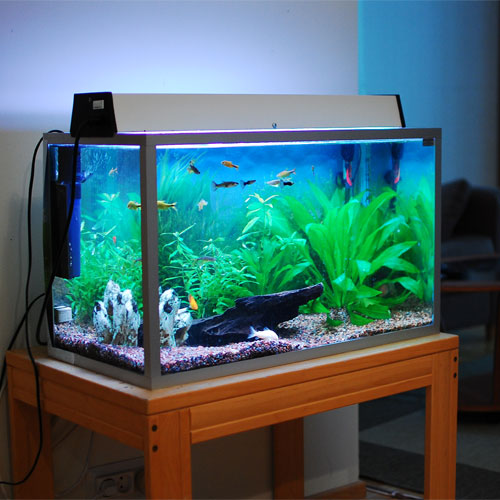 Fish Aquarium Location In Home As Per Vastu Hindi Best Accent