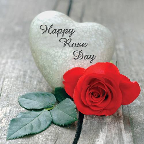 हैप्पी रोज डे:गुलाब से करें इजहारे इश्क बयां...