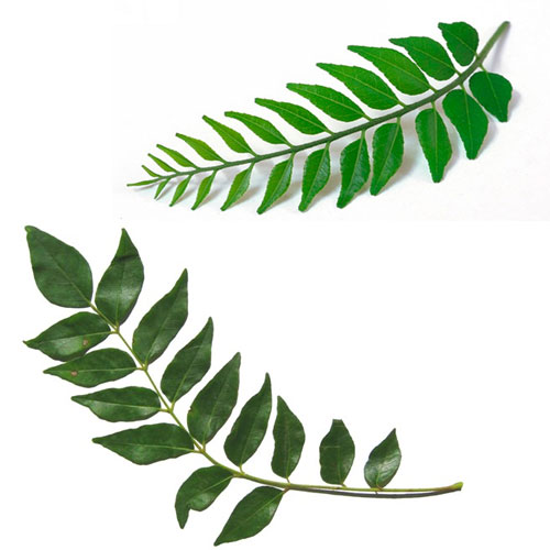 curry leaves health benefits health benefits of curry Modern Cosy Living Room Living Room Interior Design Tips