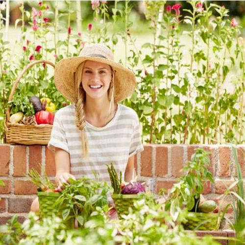 जब घर में ही मिले ताजी सब्जियां, तो बाजार क्यों जाना