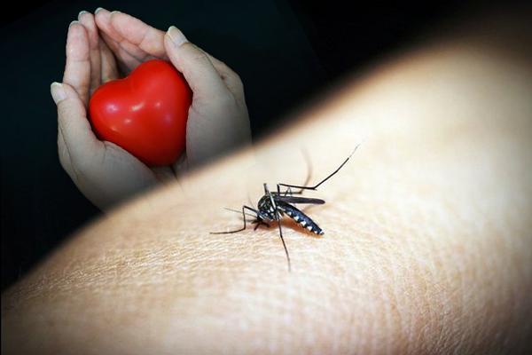 मलेरिया से हृदयाघात की 30 फीसदी अधिक संभावना