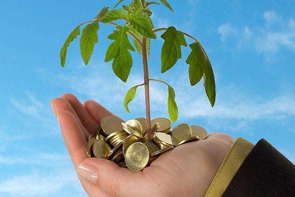 ये हैं पैसों के पेड, लक्ष्मी  को प्रिय इन पेडों को लगाने से बरसता है धन