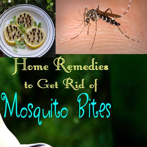 कुदरती उपाय मच्छरों से छुटकारा पाएं