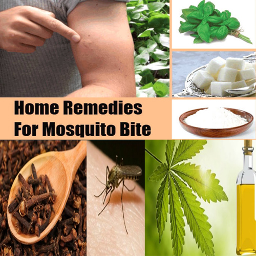 नैचुरल तरीकों से पाएं कीडे व मच्छर से छुटकारा