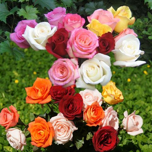 घर की रौनक बढाते गुलाब के...