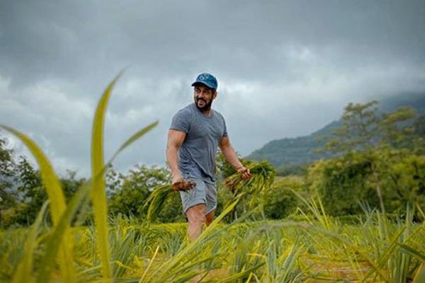 सलमान खान ने फार्म में धान के पौधे रोपे