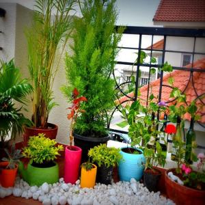 Exceptional ... Tips Apartment Garden Decoration News. टेरिस गार्डन ...