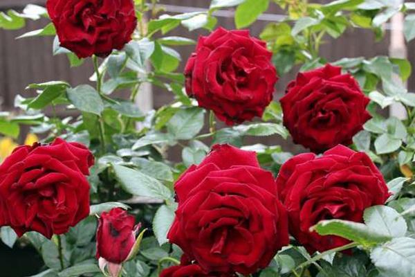 गुलाब को छोड़कर कोई भी कांटेदार पौधा घर में लगाने से होता ऐसा...