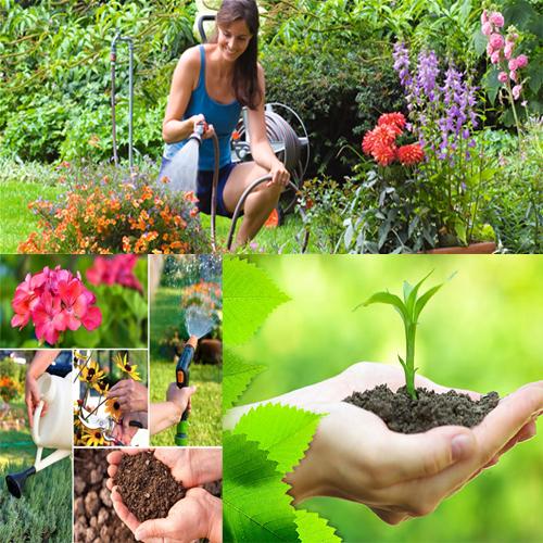 कम मेहनत में करें घर को गार्डन-गार्डन