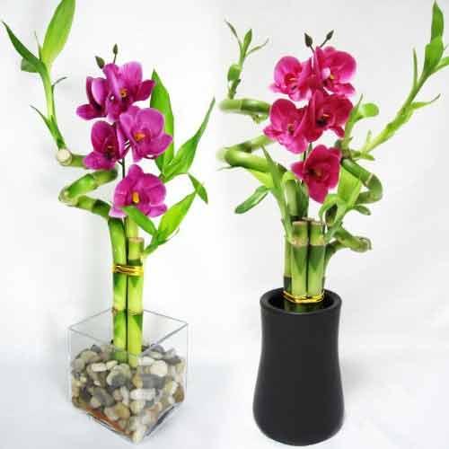 Vastu tips Bamboo plants लगाएं घर में धन-दौलत लाएं
