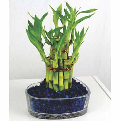 Vastu Tips Bamboo Plants Bring Wealth In Home Decor World Tips In Hindi Vastu Tips Bamboo Plants